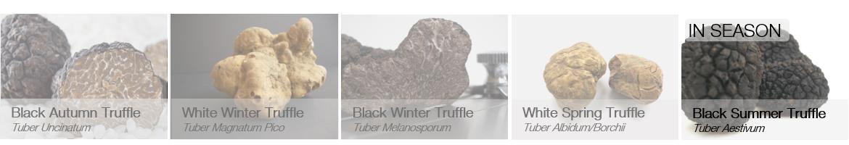 Truffles in season - aestivum