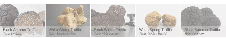Truffles in season - none