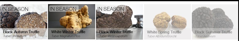 Truffles in season - uncinatum, magnatum, melanosporum