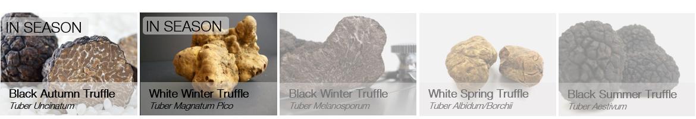 Truffles in season - uncinatum, magnatum pico