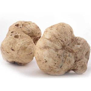 Truffle Lovers & Truffle Record Breakers