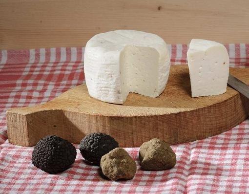 FPC2_Pecorino Cheese round with bianchetto white spring truffle (tuber borchi vitt)